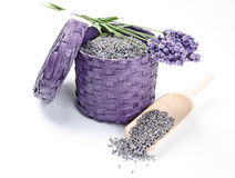 Fresh And Dry Lavender Flowers Stock Images