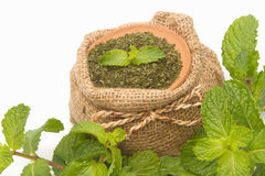 Fresh and dry mint,herb and spices Stock Photo