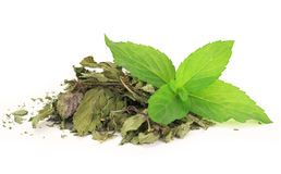 Fresh and dry peppermint Royalty Free Stock Image