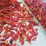 Fresh dry red Chillies royalty free stock photos