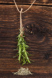 Fresh and dry rosemary herb. Stock Images