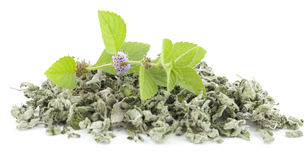 Fresh and dry spearmint Royalty Free Stock Photos