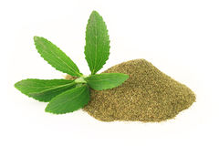 Fresh and dry Stevia Rebaudiana Stock Photos