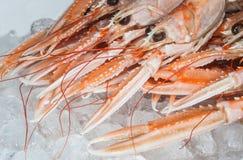 Fresh dublin bay prawns Stock Photo