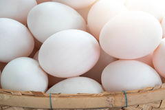 Fresh duck eggs in bamboo basket. Stock Images