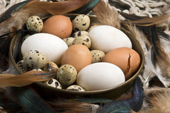 Fresh duck, hen and quail eggs Royalty Free Stock Photo