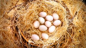 Fresh Duck`s Eggs in Haystack Basket in the Farm. Viewed from Top Royalty Free Stock Images