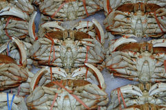 Fresh Dungeness Crab. At the market Royalty Free Stock Images