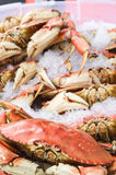 Fresh Dungeness crab on ice Royalty Free Stock Photos