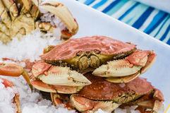 Fresh Dungeness crab at the market Royalty Free Stock Images