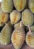 Fresh durian Royalty Free Stock Photo