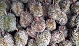 Fresh durian Stock Image