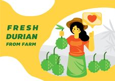 Fresh durian from woman farmer. Vector illustration background royalty free illustration