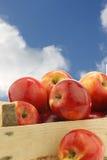 Fresh Dutch Jazz apples Stock Photos
