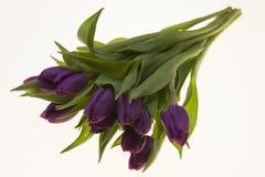 Fresh Dutch tulips a bouquet of purple flowers on a white background. Fresh Dutch tulips a bouquet of purple flowers on a white background Royalty Free Stock Photos