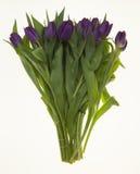 Fresh Dutch tulips a bouquet of purple flowers on a white background. Fresh Dutch tulips a bouquet of purple flowers on a white background Stock Image