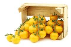 Fresh dutch yellow `tasty tom` tomatoes Stock Photo
