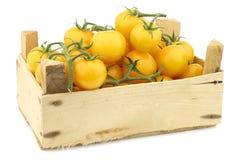 Fresh dutch yellow `tasty tom` tomatoes Royalty Free Stock Photography