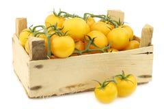 Fresh dutch yellow `tasty tom` tomatoes Stock Photography