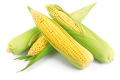 Fresh ear of corn Royalty Free Stock Photography