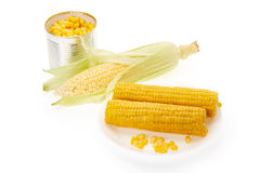 Fresh ear of corn and canned corns Stock Photography
