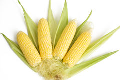 Fresh ear of corn on the cob isolated on white background Royalty Free Stock Photos