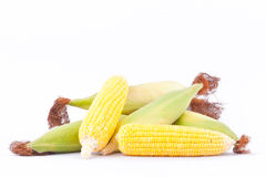 Fresh ear of  sweet corn on cobs kernels or grains of ripe corn on white background corn vegetable isolated Stock Image