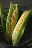 Fresh ears of corn. Whole fresh raw corn on the cob with husk Stock Photography