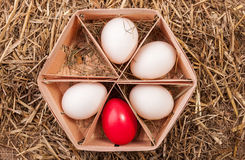 Fresh and Easter Egg Royalty Free Stock Photo
