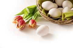Fresh easter eggs in a basket and red tulips as a holiday corner Stock Photography
