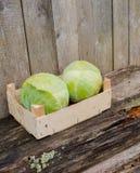 Fresh eco cabbage. In the garden Stock Photos