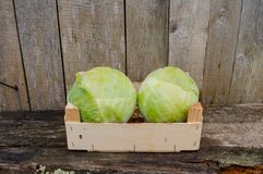 Fresh eco cabbage. In the garden Stock Photography
