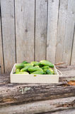 Fresh eco cucumbers. In wooden box in the garden Royalty Free Stock Images