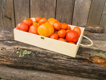 Fresh eco tomatoes Stock Photo