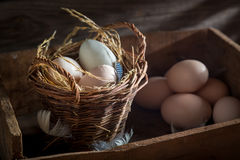 Fresh and ecological eggs in the basket Royalty Free Stock Image