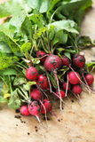 Fresh ecological radishes. A bunch of fresh ecological radishes on the table Royalty Free Stock Image