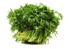 Fresh Edible Chrysanthemum coronarium. Isolated on white background Royalty Free Stock Photo