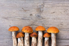 Fresh Edible forest Mushrooms orange-cap Boletus is Laid out In a Row On Old Gray Wooden Background Royalty Free Stock Image