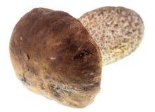 Fresh edible mushroom on a white background.  Stock Photography