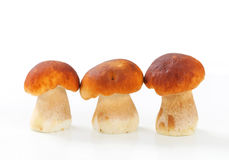 Fresh edible mushrooms Royalty Free Stock Image
