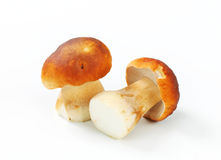 Fresh edible mushrooms Stock Photos