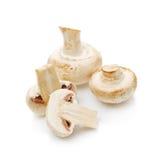 Fresh edible Portabello Mushroom Champignon over white backgroun Stock Photos