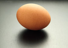 Fresh egg Stock Image