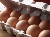 Fresh egg. Royalty Free Stock Photos
