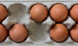 Fresh egg box Stock Images