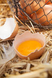 Fresh egg broken open to reveal the yolk Stock Image