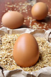 Fresh egg. Stock Photos