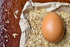 Fresh egg. Royalty Free Stock Photography