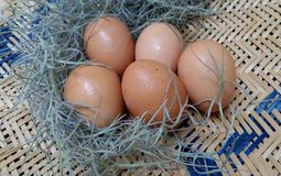 Fresh egg from the farm Royalty Free Stock Image