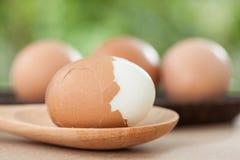 Fresh egg on nature background Stock Image
